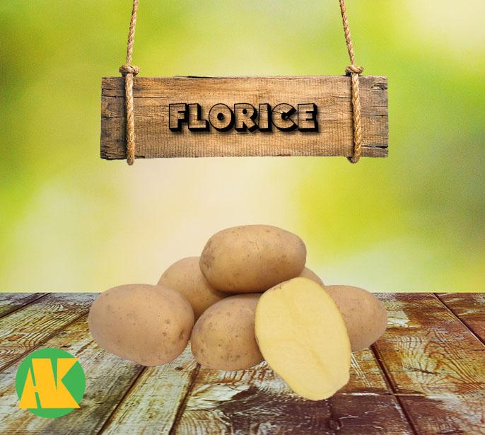 florice patates tohumu