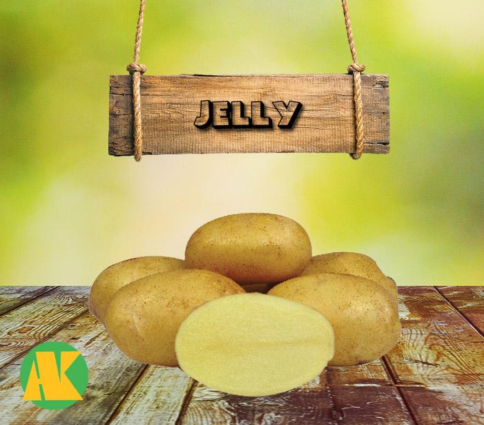 jelly patates tohumu