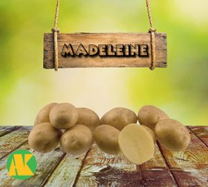 madeleine_patates_thmb
