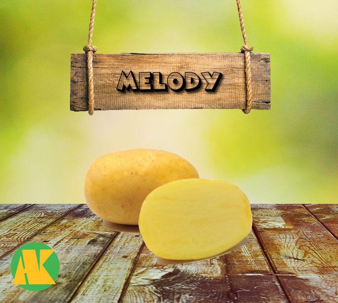 melody patates tohumu