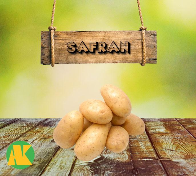 safran patates tohumu