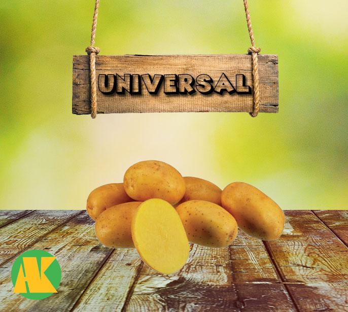 universal patates tohumu