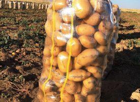 Patates Tarlalarımız (18)
