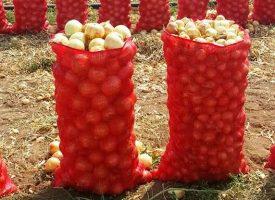 Soğan Tarlalarımız (14)